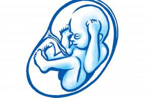 28. týden těhotenství