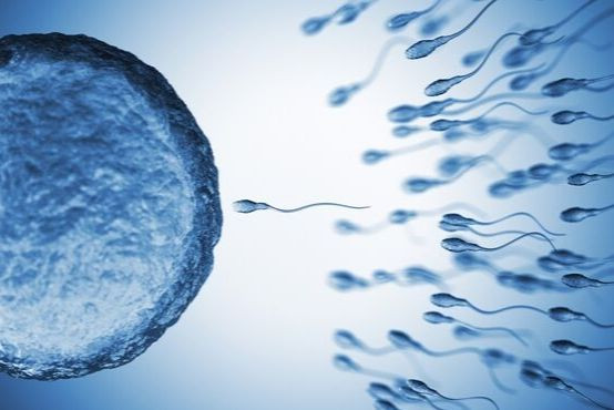 Pravda a mýty o ovulaci