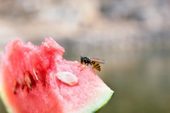 Včelí, vosí nebo sršní bodnutí u dětí