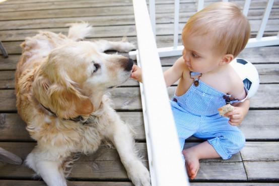 Co dělat, když dítě kousl pes nebo škrábla kočka?